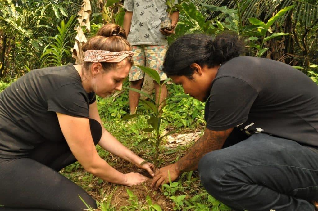 Tree Planting in Sumatra Jungle