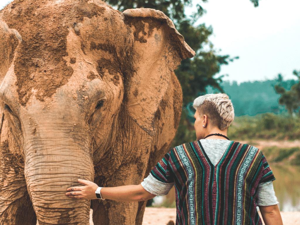 elephant parks