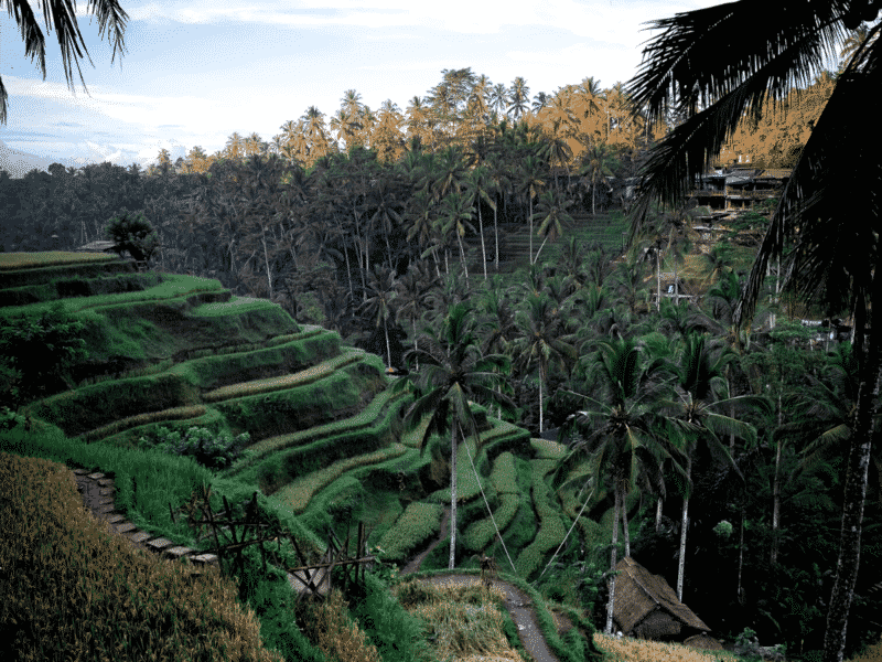 Things to do in Ubud. Bali