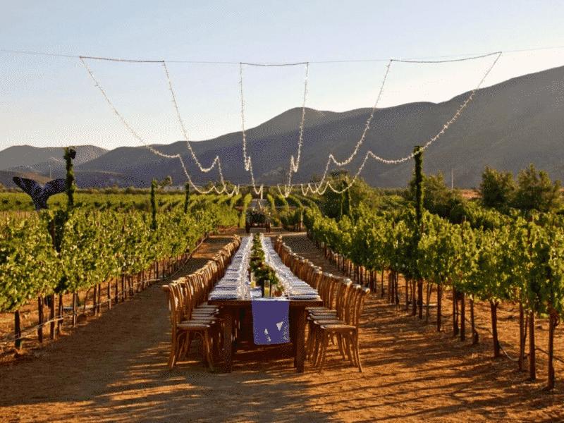 Baja California winery, Mexico