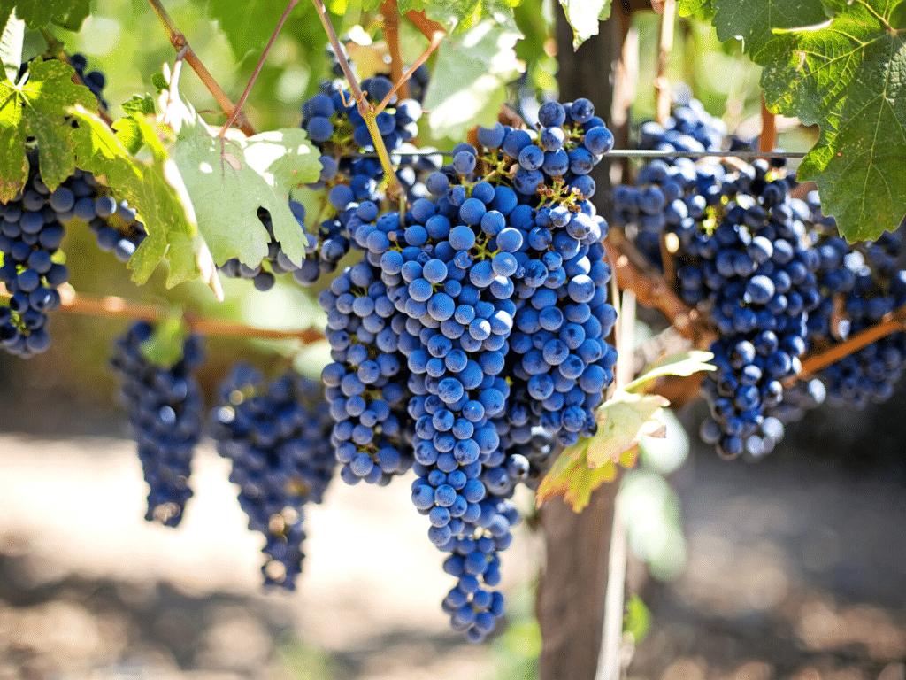 sustainable wineries around the world