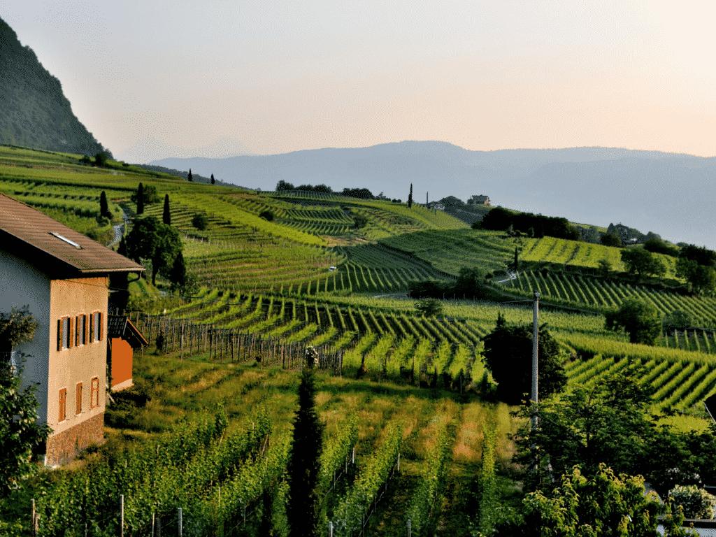 ecofriendly vineyards globally