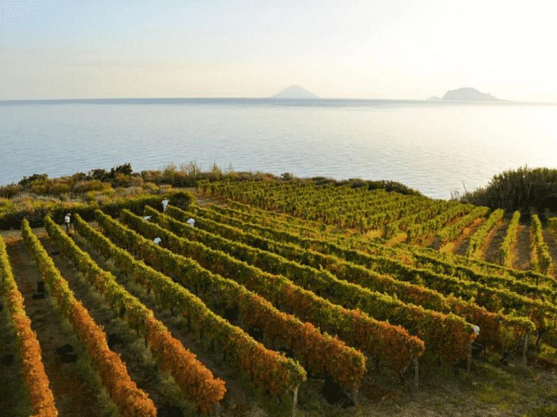 Tasca d'almerita, Sicily, Italy