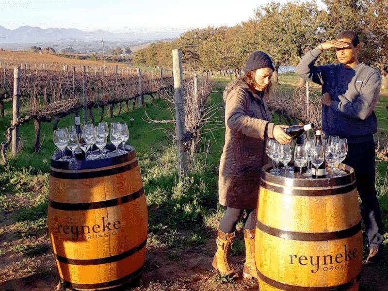 Reyneke wines, South Africa