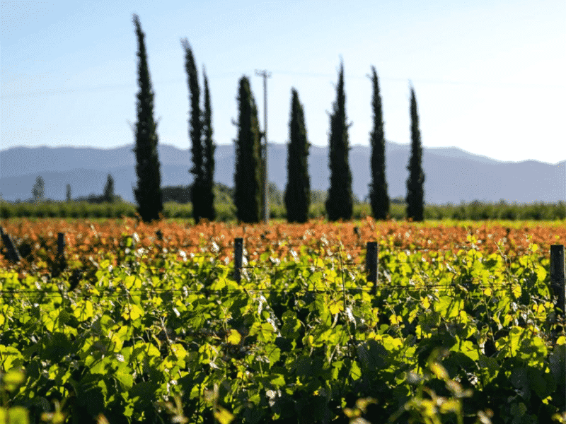 La Playa Wines, Chile