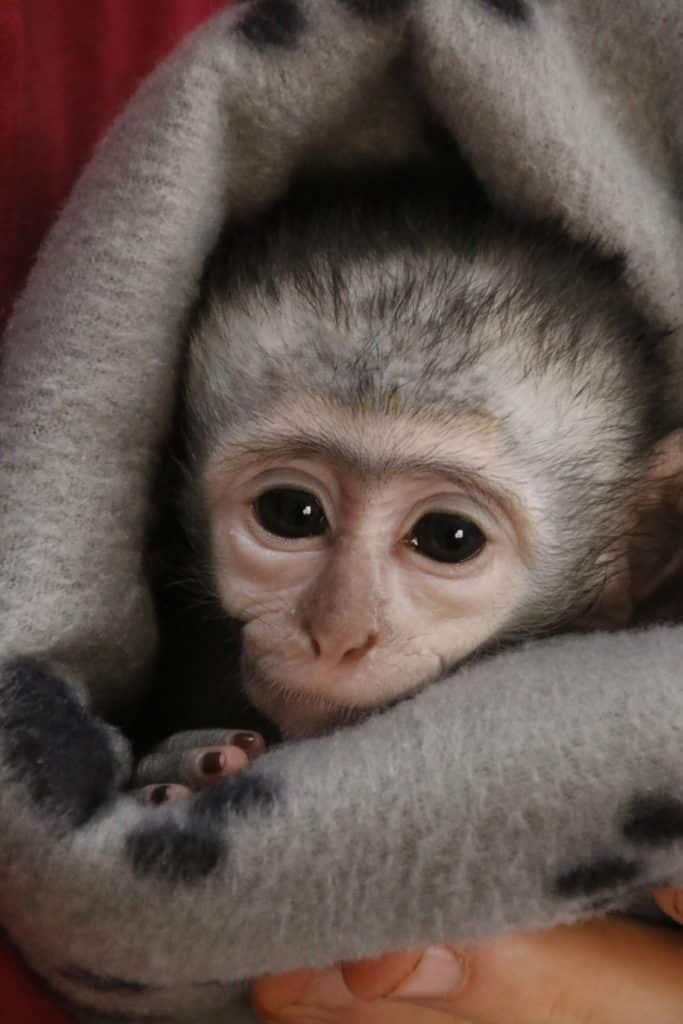 Wildlife Tourism - orphaned monkey care